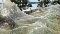 Invazie de pânze de păianjen în Australia: Explicația specialiștilor