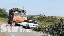 Dezastru filmat pe drum. Alertă: Copaci tăiați ilegal la Hâncești