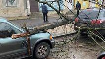 Un copac a căzut peste o maşină pe strada Columna din Chişinău