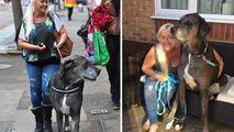 Cel mai înalt câine din lume care îl depășea pe LeBron James a murit