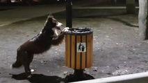 Un câine din Capitală, filmat cum strânge gunoiul și îl aruncă în urne