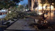 Un copac, smuls din rădăcini și doborât la pământ în Capitală