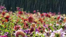 Meteo: La Paștele Blajinilor se așteaptă vreme instabilă și ploioasă