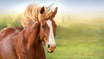 Caii schimbă viețile persoanelor cu autism sau dizabilități motorii