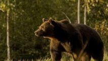 Prinţul Emanuel susține că nu l-a împuşcat pe ursul Arthur