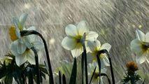Weekend rece și ploios: Superstiția meteo legată de vremea de Florii