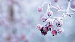 Cea mai scăzută temperatură de iarnă în R. Moldova a fost -35,5°C
