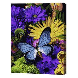 Fluturele magnific, 40х50 cm, pictură pe numere Articol: GX37064