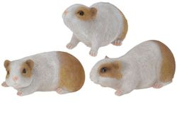 Морская свинка декоративная