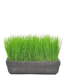 Grass- potted lawn, 23 cm