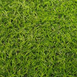 Ландшафтная декоративная трава газон Irene 25