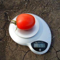 Dyno F1 (5000 seminţe)
