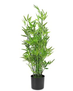 Bamboo in plastic pot, 91 cm