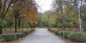 "Парк ""Алунелул"""