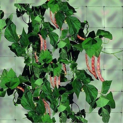 Cетка шпалерная FLORA GREEN (2м x 10м)