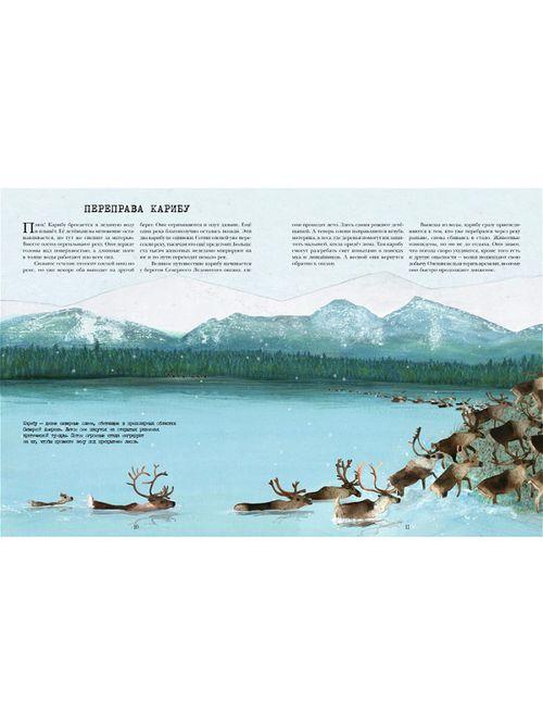 купить Миграция. Невероятные путешествия животных в Кишинёве