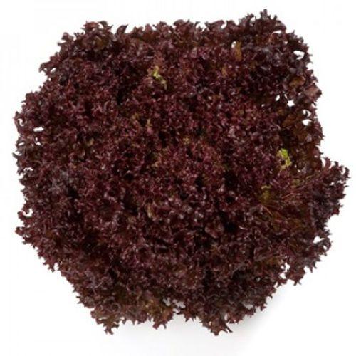 Кармези RZ (1000 семян)