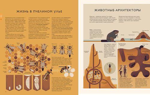 купить Мир природы в Кишинёве