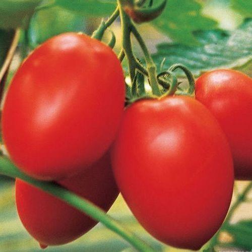 Колибри F1 (1000 семян)