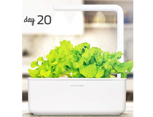 купить SMART HOME GREEN LETTUCE REF. GLETT-REFILL-3 CLICK&GROW в Кишинёве