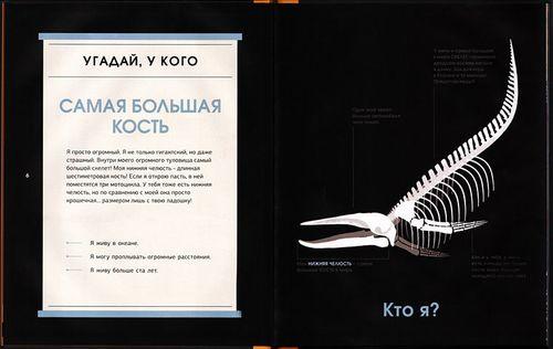 купить Удивительные кости. Десять животных-рекордсменов в Кишинёве