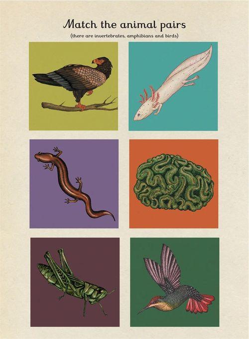 купить Animalium Activity Book в Кишинёве