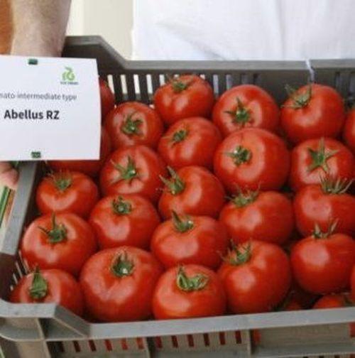 Абелус F1 (1000 семян)