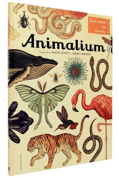 купить Animalium - Katie Scott, Jenny Broom в Кишинёве