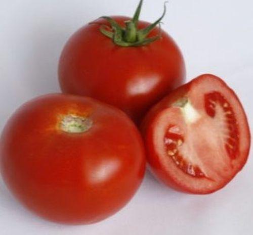Чинто F1 (1000 семян)