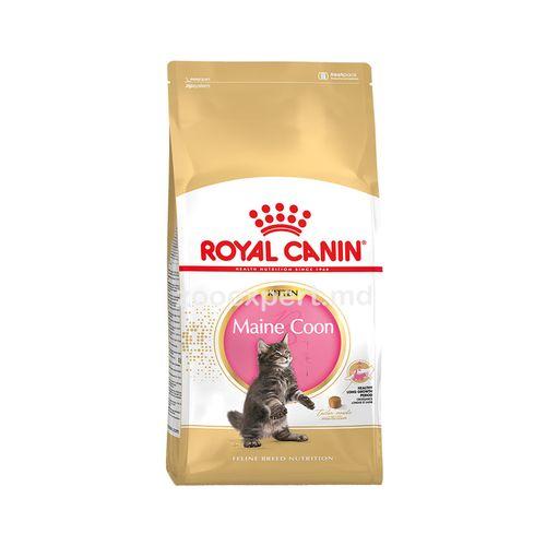 cumpără Royal Canin MAINE COON KITTEN 2 kg în Chișinău