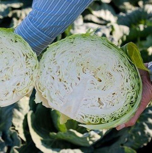 Сармалин F1 (2500 семян)