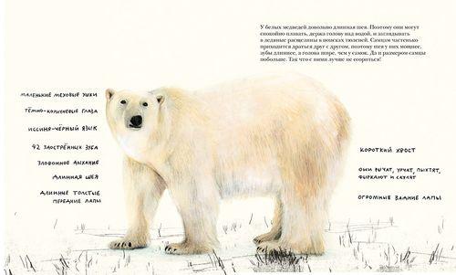 купить Белый Медведь в Кишинёве